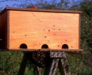 Newly completed hive, not even dry but the bees are moving in already
