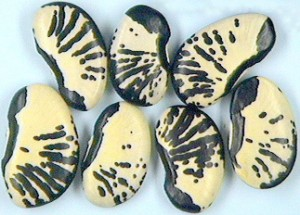 Stunningly striped Zebra Lima beans.