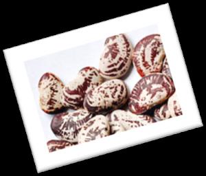 Christmas Lima Beans