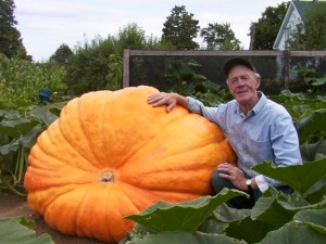 We supply you with special Atlantic Giant seed to allow you to grow a potential winner.