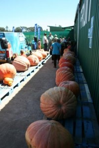In total 48 Giant Pumpkins were entered.