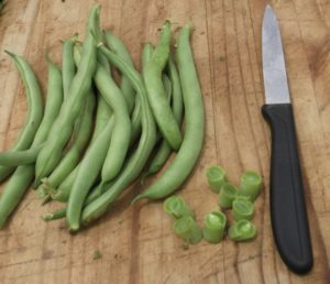 Tender Delight Bush beans a real winner in the garden